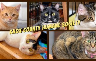 Knox County Humane Society
